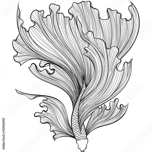 Photographie Betta fish or Siamese fighter fish in hand drawn line art style