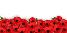 Horizontal Banner Template With Red Poppy Flowers On A White Background. Remembrance Day Concept. Vector Illustration