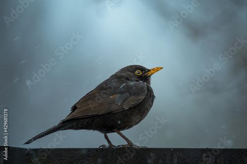 Ptak czeka w deszczu na wiosnę - fototapety na wymiar