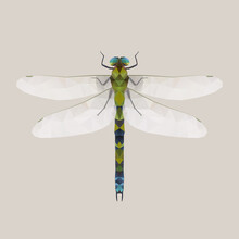 Illustration Of Dragonfly