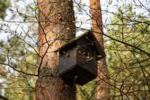 Budka Dla Ptaków Na Drzewie Wśród Pąków