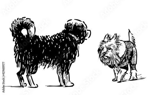 Sketch of two domestic dogs meet on a walk Fototapet