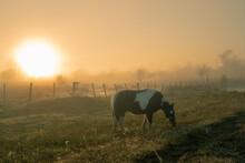 Caballo Pastando Al Amanecer Con Neblina Que Se Interpone Al Sol.