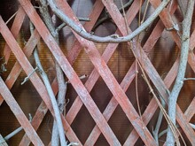 Dry Branches On The Background Of A Wooden Trellis Gazebo