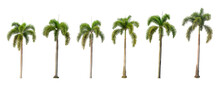 Six Palm Trees On A White Background