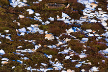 Dark Green Moss Covered In Small Sea Shell Fragments