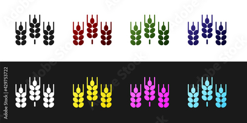Cuadros en Lienzo Set Cereals set with rice, wheat, corn, oats, rye, barley icon isolated on black and white background