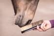 Leinwandbild Motiv Fellpflege beim Pferd