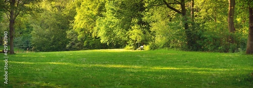 Fotografia Wooden bench under the mighty deciduous trees on a green forest lawn