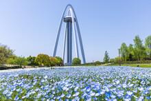 愛知県一宮市 国営木曽三川公園 138タワーパーク ツインアーチ138と青いネモフィラ