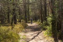 A Tourist Hikes On A Shady Hiking Path In The Bavarian Forest
