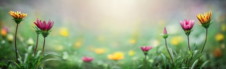 Yellow and purple flowers on a blurred spring and sammer background. Macro shot. Very shallow focus. Summer and spring fantasy flower background. Wide format, free space for design.