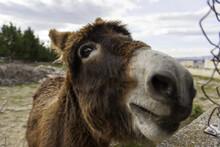 Donkey In Field