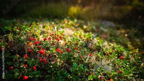 Kwiaty leśne kwitnące latem - runo leśne
