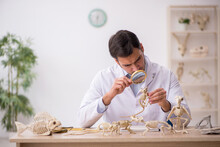 Young Male Paleontologist Examining Ancient Animals At Lab