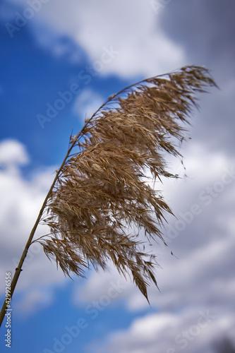 Trawa na wietrze - fototapety na wymiar
