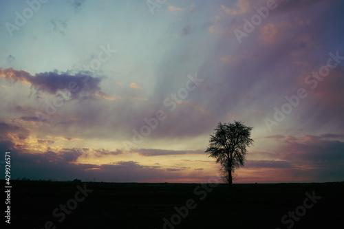 Samotne drzewo na tle chmur chwilę po zachodzie słońca - fototapety na wymiar