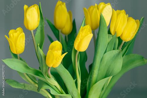 Fototapeta bukiet żółtych tulipanów obraz