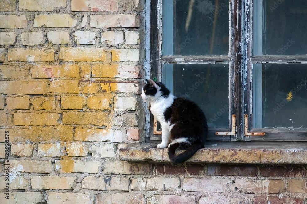 Fototapeta Czarno-biały kot siedzący na parapecie starego drewnianego okna