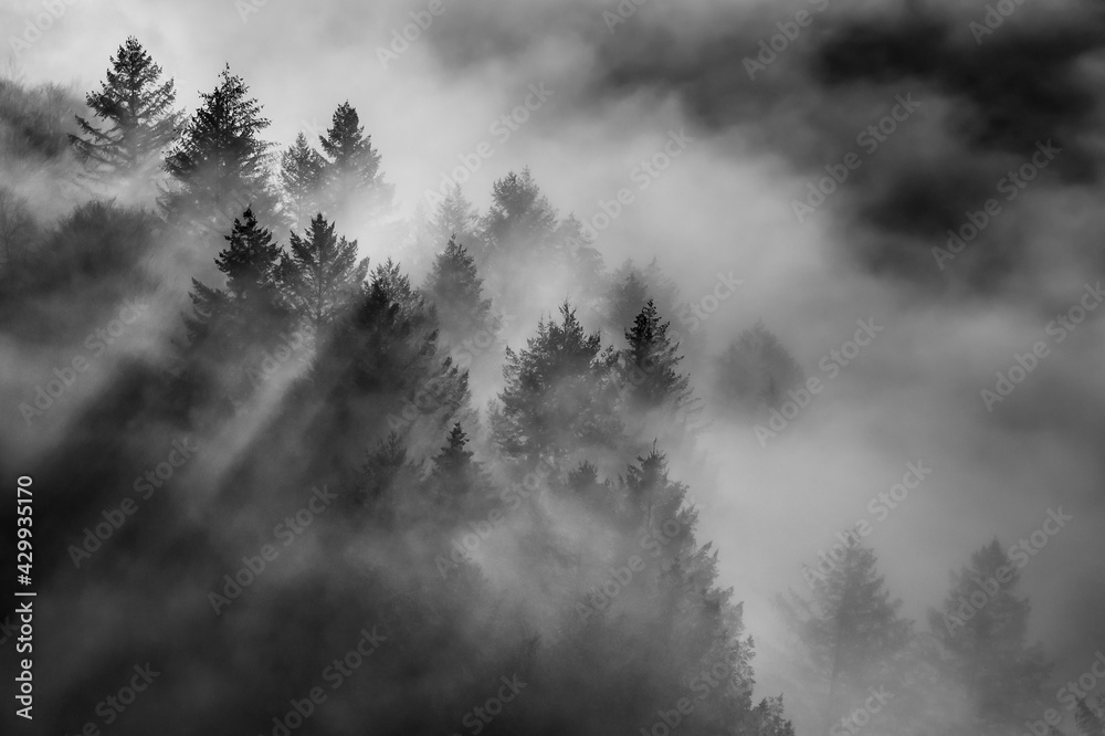 Aerial beautiful view of the misty and cloudy mountains covered in trees in the park