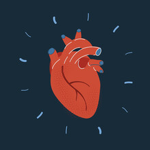 Vector Illustration Of Human Heart On Dark Backround.