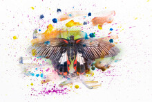 Watercolor Spray, Drops, Butterfly In The Style Of Watercolor Spray. Collage Of Photos Of Butterflies And Paint
