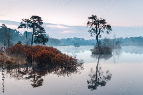 Fototapeta bog myrtle bushes at the edge of a lake with small islands in the morning, Oiste
