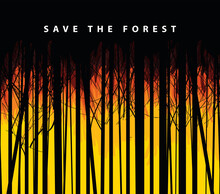 Eco Poster Concept With Wildfire And The Words Save The Forest. Vector Illustration In Black And Orange Colors With Silhouettes Of Young Slender Trees On The Background Of Flaming Forest.