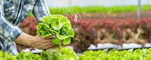 Canvas Print Farmer holding hydroponic vegetable in farm, natural organic plant growth, Non-t