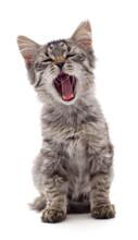 Sleepy Kitten That Yawns.