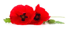 Two Red Poppy Flowers.