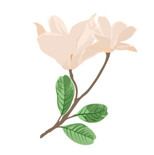 White Magnolia Vector Stock Illustration. A Branch With Beige Flowers In Pastel Beige Tones. Spring Illustration Template For A Card. Isolated On A White Background.