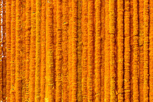 India Flower Garland, Marigold Garland, (Tagetes Erecta, American Marigold, African Marigold) Background, Indians Believe Means Prosperity And Yellow Is The Color Of The House Of God.