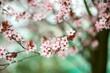 Wiosna! Kwitną drzewa