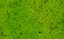 In Thailand, Duckweed Is Used As Food For Fish In Ponds.