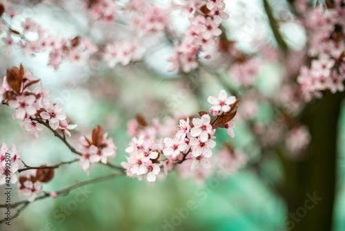 Wiosna! Kwitną drzewa - fototapety na wymiar