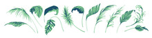 Palm Leaves, Artistic Design, Colorful Minimal Pattern, Trendy Graphic, Vector Illustration.