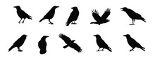 Silhouettes Of Bird Crow