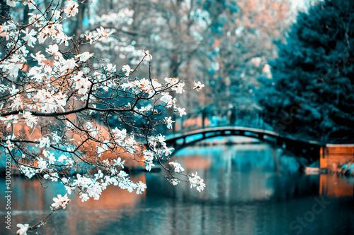 Park z magnoliami i mosteczkami
