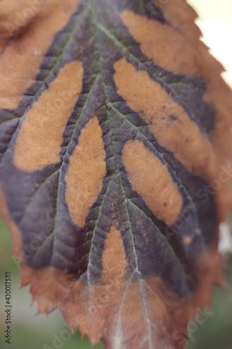 stary  liść  pozostawiony  na  krzewie  widziany  z  bliska - fototapety na wymiar