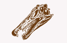 Graphical Vintage Skull Of Spinosaurus, Paleontology