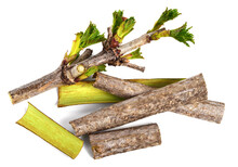 Guelder Rose Bark Strips (Viburnum Opulus). Fresh Medicinal Raw Material. Also Known As Water Elder, Cramp Bark, Snowball Tree, Common Snowball, And European Cranberrybush. Isolated On White.