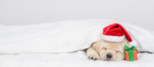Cute Golden Retriever Puppy Wearing Red Santa's Hat Lies With Gift Box Under Warm Blanket On A Bed At Home. Empty Space For Text