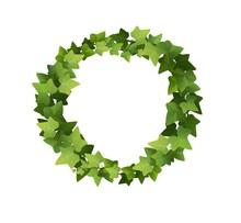 Ivy Wreath. Сlimbing Vine. Cartoon Vector Illustration.