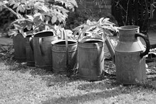 Old Watering Cans In The Garden