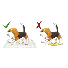 Puppy Hygiene Training, Beagle Peeing In Pee Pad And Floor In White Background With Right And Wrong Icon