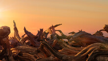 Driftwood, Pile Of Aged Branches During Sunset