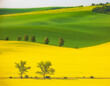 Leinwanddruck Bild - landscape with trees  and rape seed crop