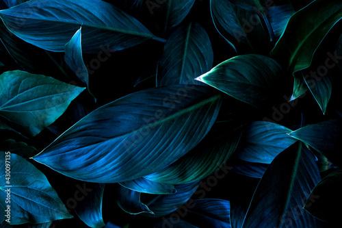 Fotografija closeup nature view of tropical leaf background, dark tone concept