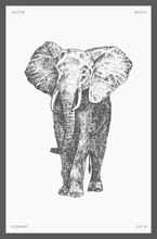 High Detail Drawn Vector Elephant Drawing Sketch